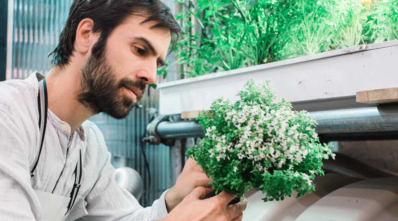Infarm设计出一款使用机器学习技术的便利店垂直农场为消费者提供超新鲜的食材 农业科技 第3张-泥人传说