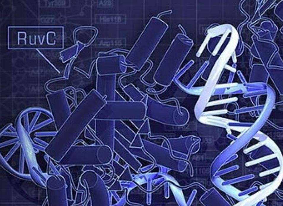 FDA将批准首个罕见病基因疗法基因治疗时代或将来临 基因工程 第3张-泥人传说