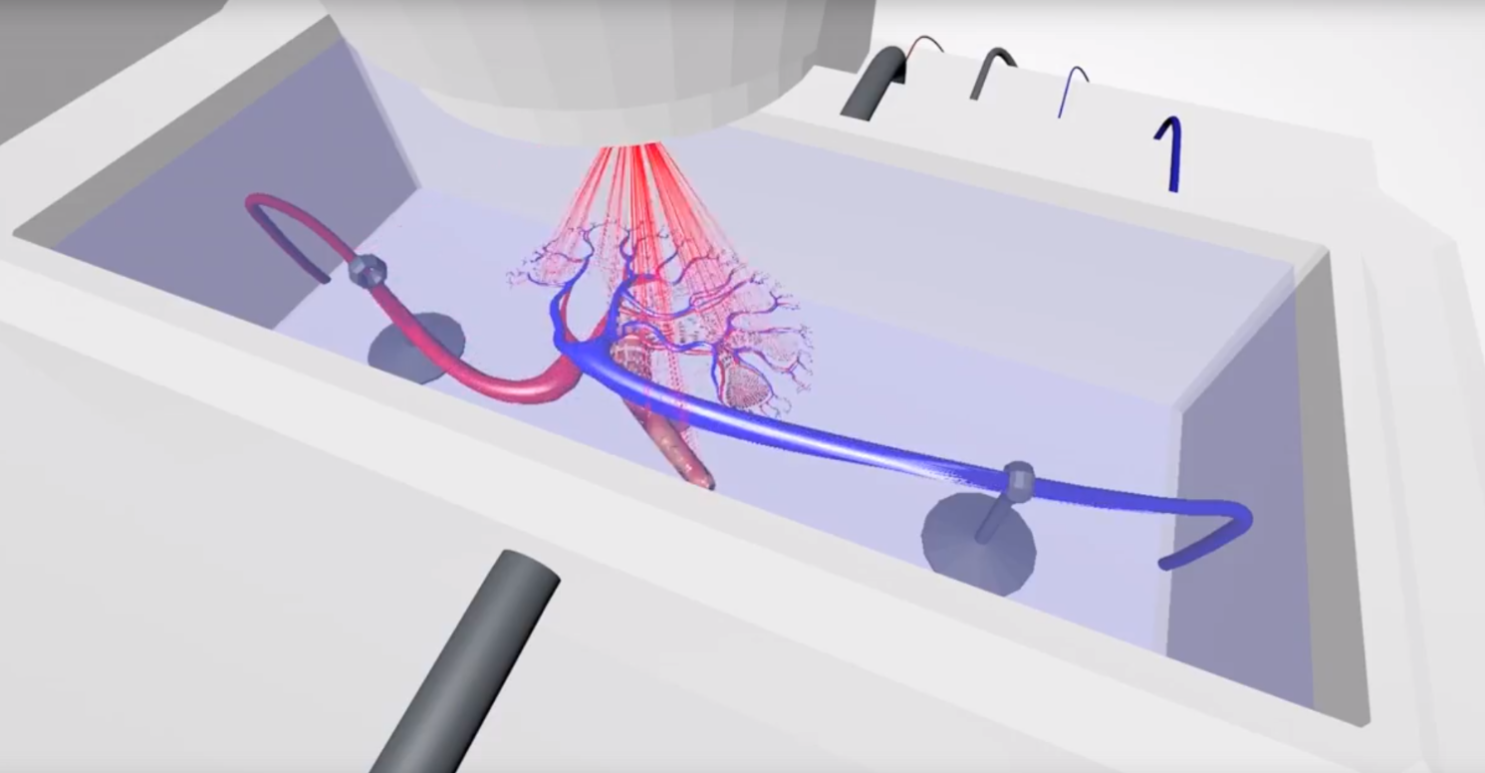 Prellis Biologics获得180万美元种子轮融资3D打印速度快了至少100倍 3D生物打印 第2张-泥人传说