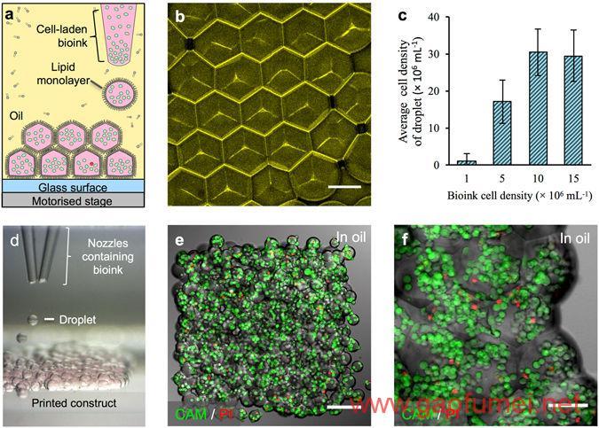 牛津大学找到3D打印活体组织新方法人造人还远吗 3D生物打印 第3张-泥人传说